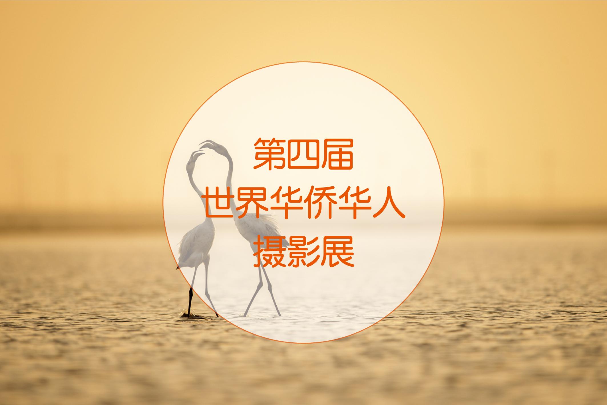 如何在华人摄影网提交《第四届世界华侨华人摄影展》参赛作品