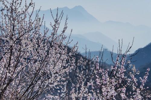 春到龙泉峪