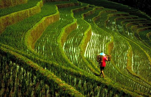 16 Singapore Tan Lip Seng 陈立诚 Bali Rice Field (1980) PSA Gold Medal 53rd Circle of Confusion USA 199